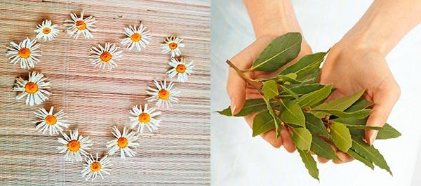 укрепление волос лавровым листом и ромашкой