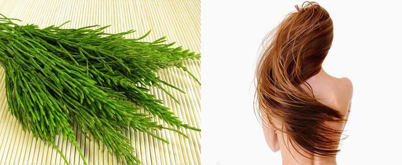 Выпадение волос и полевой хвощ thumbnail