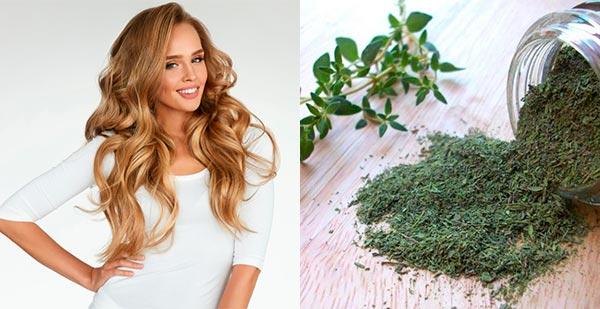 чабреца трава для волос