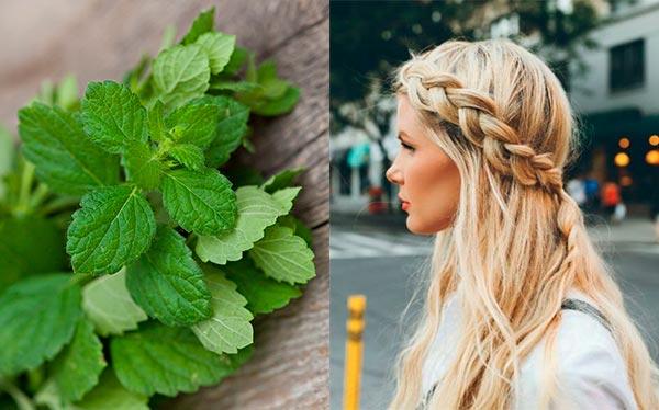 раствор перечной мяты для волос
