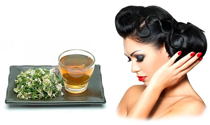 тысячелистник полезные свойства для волос