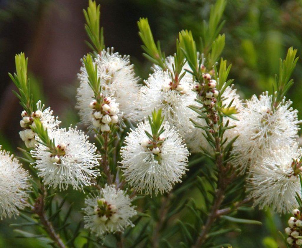 спрей с маслом чайного дерева для волос