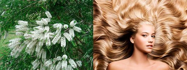 свойства масла чайного дерева для волос