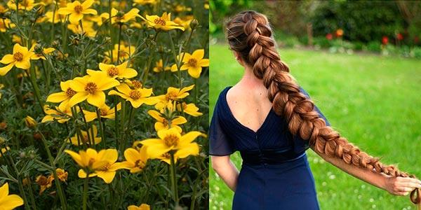 череда трава для волос