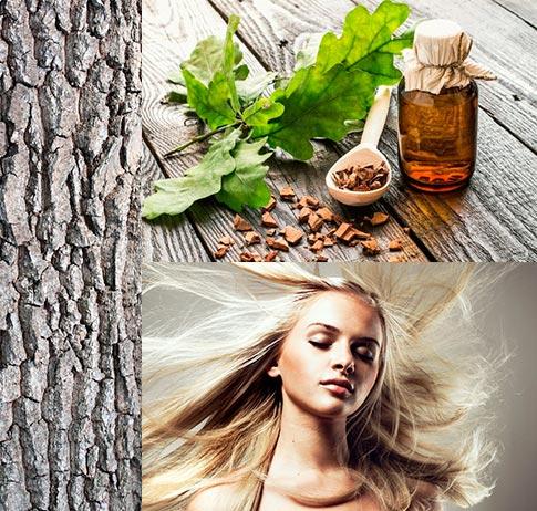кора дуба против выпадения волос
